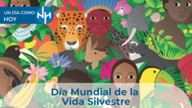 Photo of Día Mundial de la Vida Silvestre
